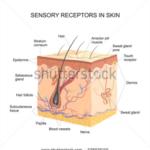 Hyper-sensitive Skin venom