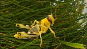Bio-insecticide venom
