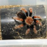 Venomtech, Metrion Biosciences, pain relief, research, spider, snake, venom
