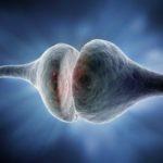 The Biologist Spotlight on: Pharmacology