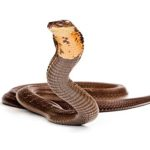 pharmaceutical snake
