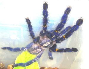 Invertebrate species - Venomtech